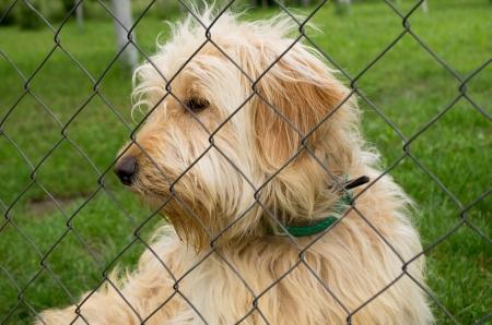 come home: sad dog in asylum