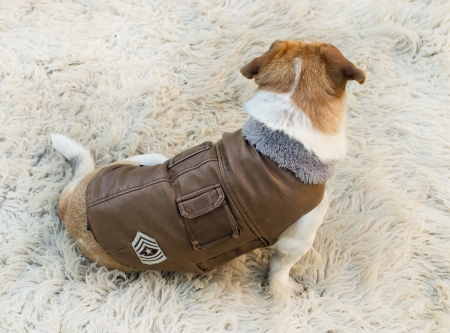 Lovely dog in jacket is waiting for a walk photo