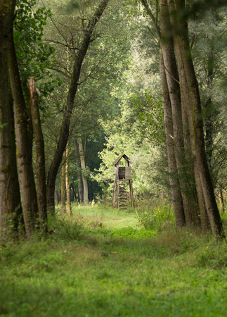 far away look:  wooden watchtower in forest on summer morning Stock Photo