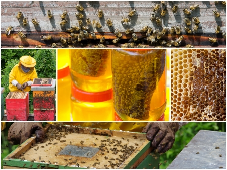 final: Collage of honey production process from honeycomb to final product