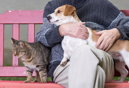 on lap: Man cuddling dog and cat sitting next to them on bench Stock Photo