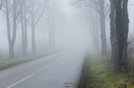 Road with tree alley on thick fog, short sighted ahead
