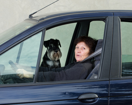 Woman drives car and dog sitting on passenger seat photo