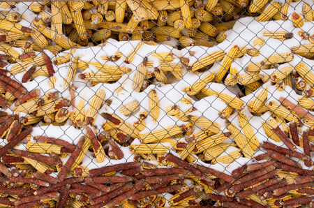 grainery: Corn cobs with snow in storage place Stock Photo