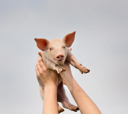 White piglet in girls hands in sky photo