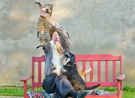 animal fight: Old man keeps the cat from dogs