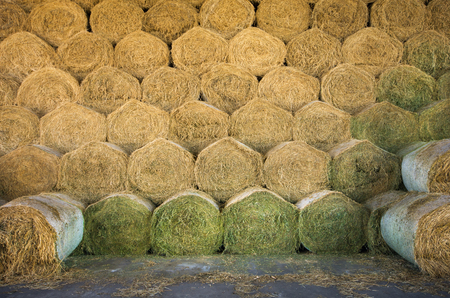 grainery: Rolled hay bales stacked in storage Stock Photo
