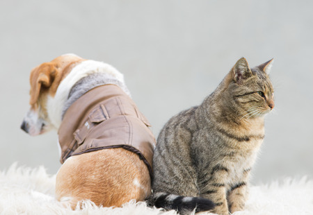 dissimilarity: Cat and dog sitting back to back Stock Photo