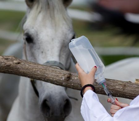 Jeune femme vétérinaire préparation injectable pour cheval à la ferme Banque d'images