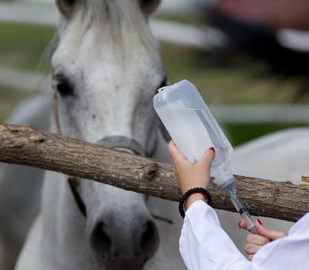 veterinary medicine: Young female veterinarian preparing injection for horse on farm