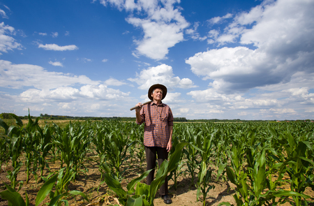 old farmer: Old man standing in corn field and holding fork on shoulder
