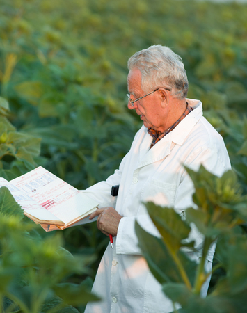 agronomist: Old agronomist in white coat looking in notebook in sunflower field Stock Photo