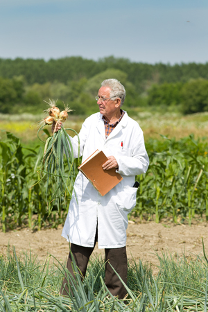 conceived: Old agronomist holding and examining onion from ground