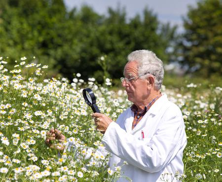 bata blanca: Experto en la capa blanca examina las flores del prado
