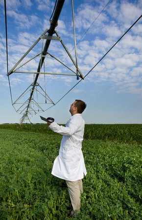 Agronomist in white coat standing beneath irrigation system on peas field photo