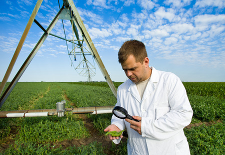 Agronomist in white coat examines peas with magnifier on field photo