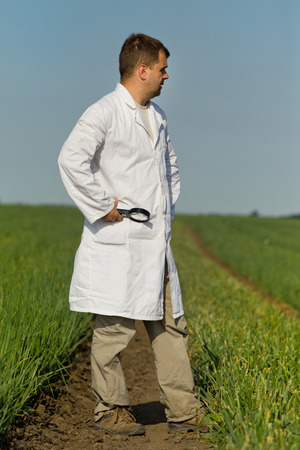agronomist: Agronomist in white coat with magnifier in hand standing in onion field