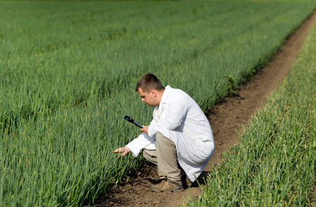 agronomist: Agronomist in white coat looking through magnifier in onion field Stock Photo