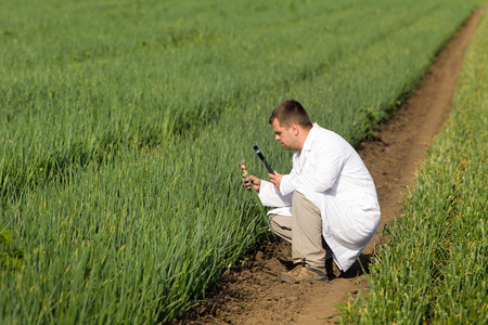 agronomist: Agronomist in white coat looking through magnifier in onion Stock Photo