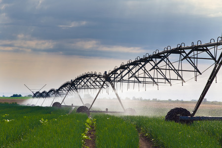 Onion field irrigated by a pivot sprinkler system photo