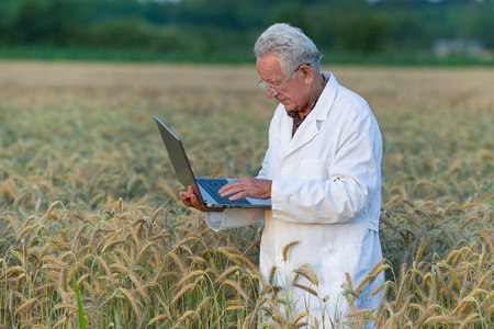 agronomist: Experienced agronomist holding laptop in wheat field