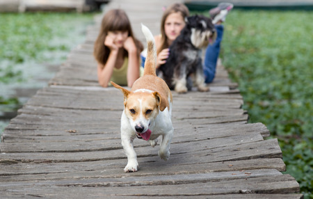 endear: Mixed race dog with tongue out in the forefront and two girls with miniature schnauzer in background