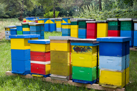 Rows of colorful beehives arranged in forest photo