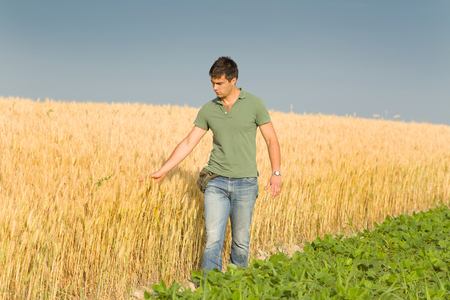 conceived: Conceived young farmer touching ripe golden wheat in field