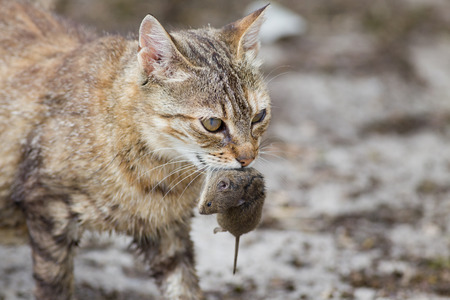 ネズミ 10