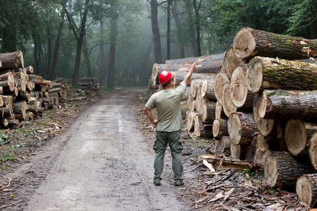 Lumberjack with helmet standing in front of stacked trunks in forest