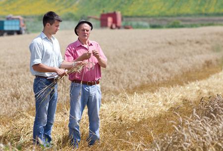 Boer toont tarwe oren naar de zakenpartner op het veld