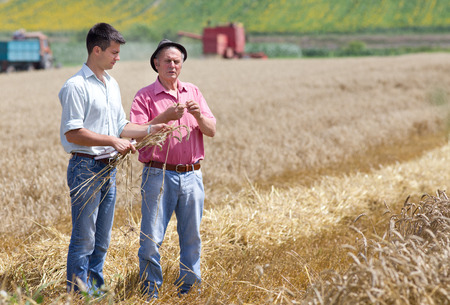 Peasant showing wheat ears to the business partner on the field