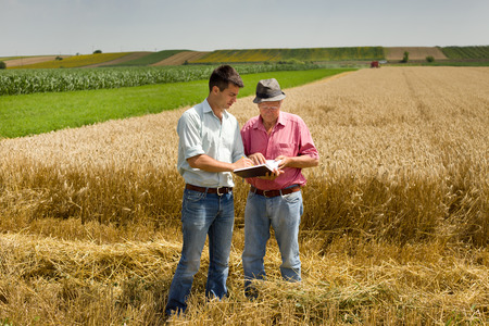 cosecha de trigo: Campesino y negocios que buscan en el cuaderno en el campo de trigo