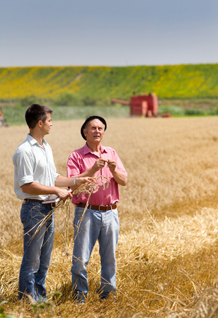 peasant: Peasant showing wheat ears to business partner on the field