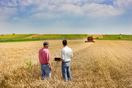 campesino: Campesino y el hombre de negocios que habla en campo de trigo durante la cosecha