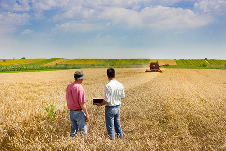 agricultural: Peasant and business man talking on wheat field during harvesting