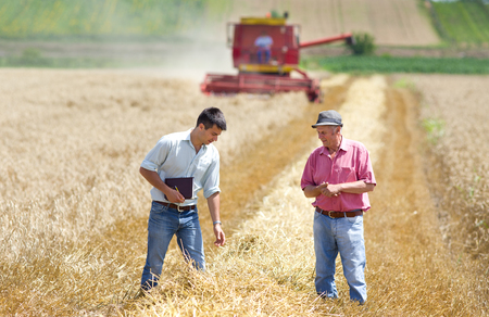 Peasant and business man walking on wheat field during harvesting Archivio Fotografico