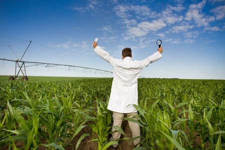 agronomist: Satisfied agronomist standing with tablet and magnifier in raised hands in corn field
