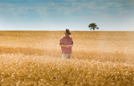 conceived: Conceived farmer walking on wheat field and looking at tablet