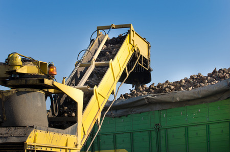 combine harvester: Cosechadoras vertido remolacha azucarera en remolque