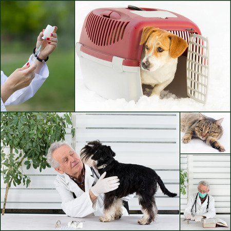 Collage of veterinarian and pet images in veterinarian ambulance