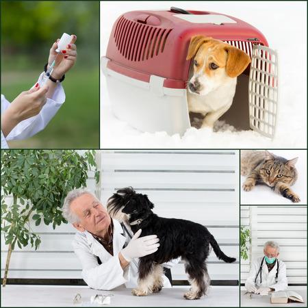 Collage von Tierarzt und Tierbilder in Tierarzt Krankenwagen Standard-Bild