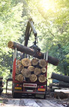 Truck loading wooden trunks on trailer in forest photo