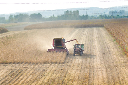 soybean: Combine harvester and tractor working in soybean field in autumn