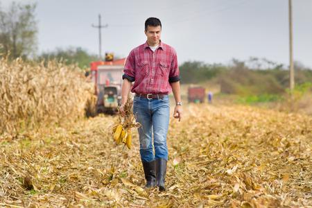granjero: Agricultor joven que recorre en campo y la celebración de las mazorcas de maíz durante la cosecha Foto de archivo