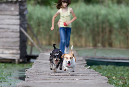 wooden dock: Two adorable dogs and children running on wooden dock on the lake