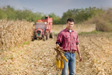 Jonge landbouwer staande op het veld tijdens de oogst en het tonen van maïskolven Stockfoto