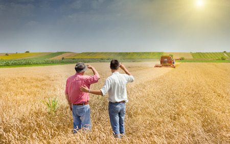 wheat harvest: Peasant and business man talking on wheat field during harvesting
