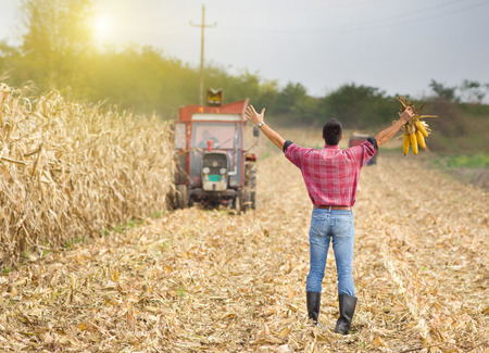 raised arms: Satisfied farmer holding corncobs in raised arms on the corn field during harvest Stock Photo