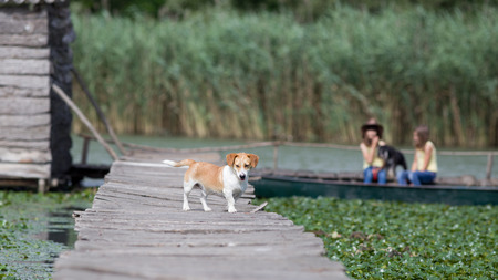 wooden dock: Dog standing on wooden dock while two girls with another dog sitting in boat in background Stock Photo